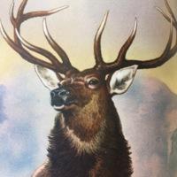 Detail, Elk.jpg
